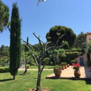 IMG_6485Villa Saint-Tropez Cote d`Azur Garten